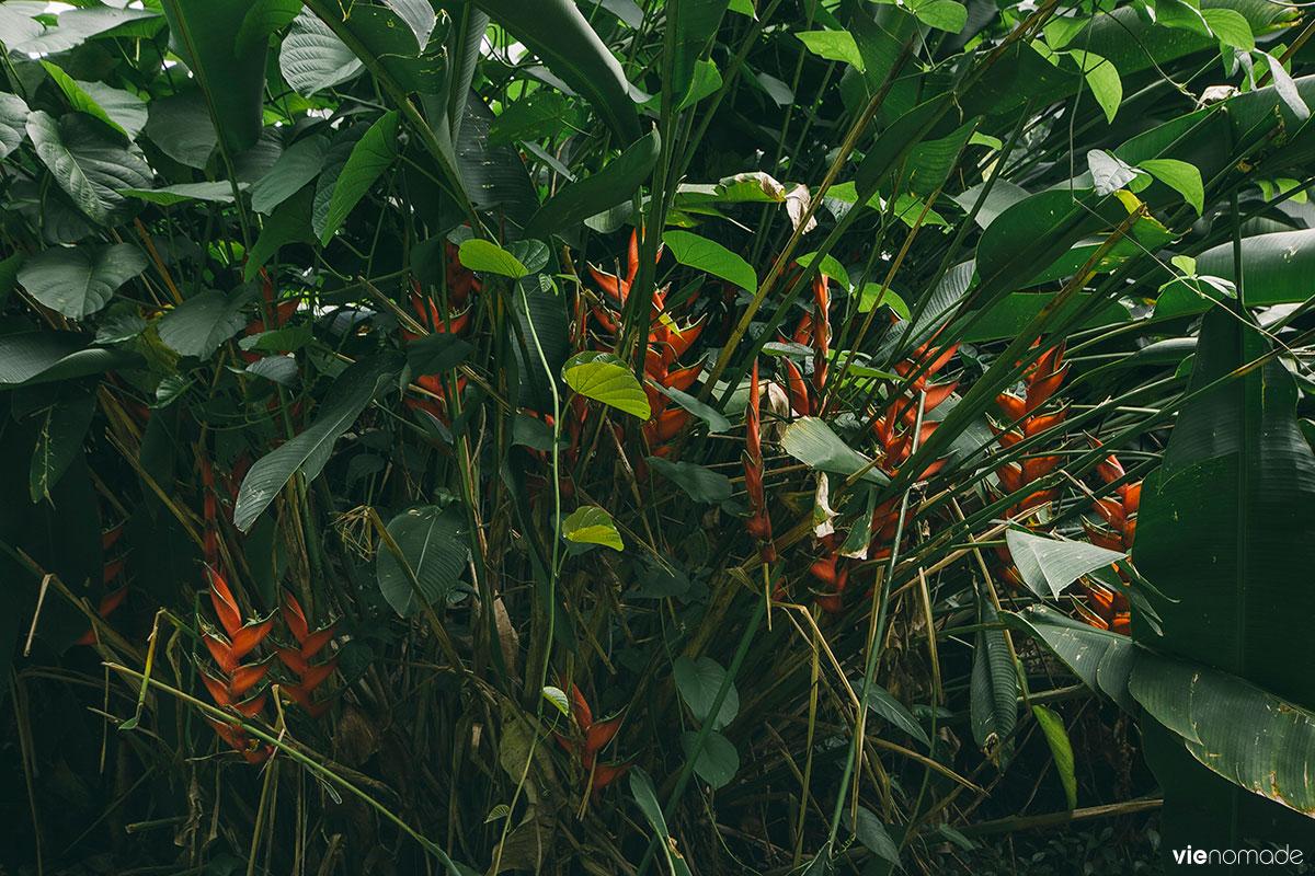 Marcher à Tahiti: randonnée Fautaua