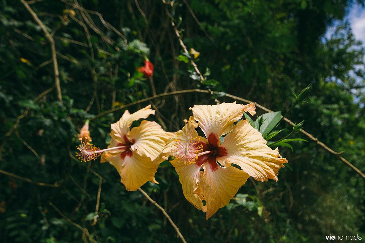 Randonner en Polynésie: Tahiti