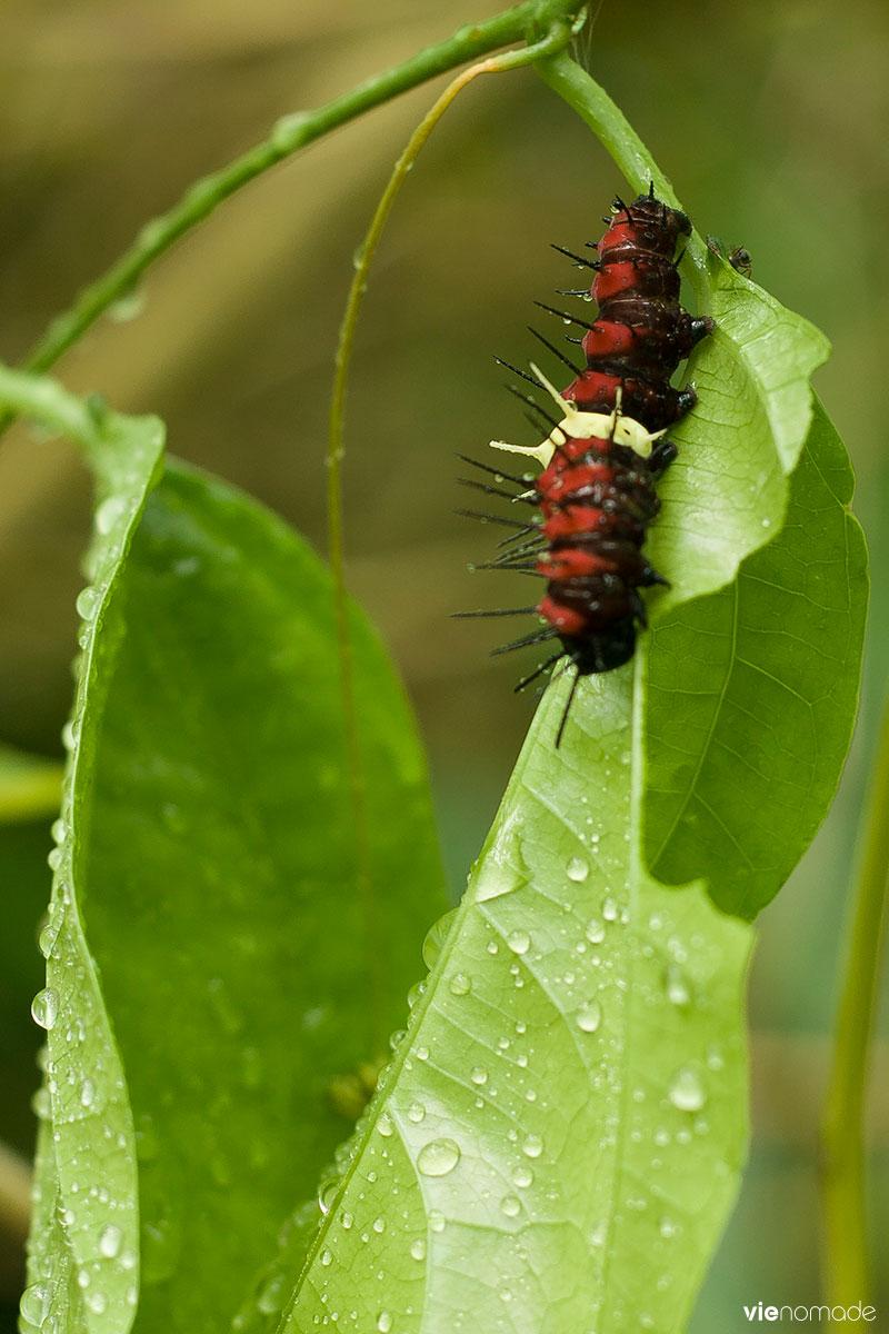 Sanctuaire des papillons à Siquijor