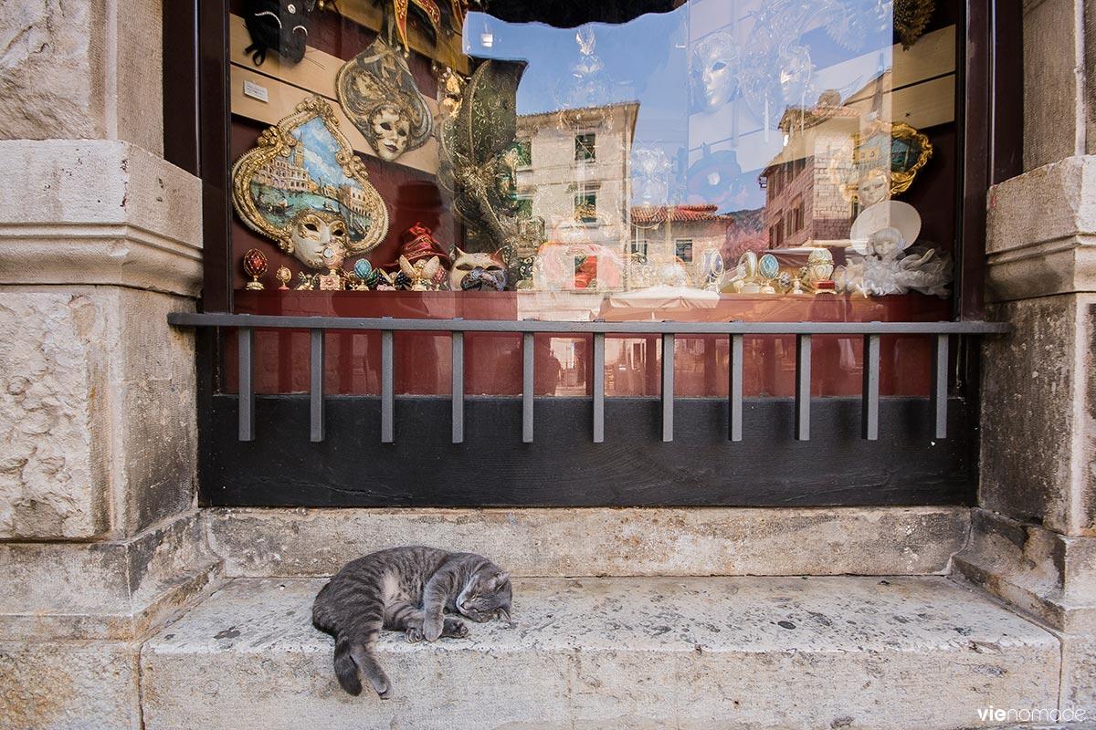 Les chats de Kotor