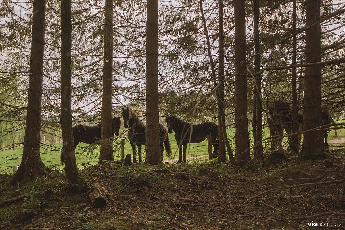 Chevaux à Schladming