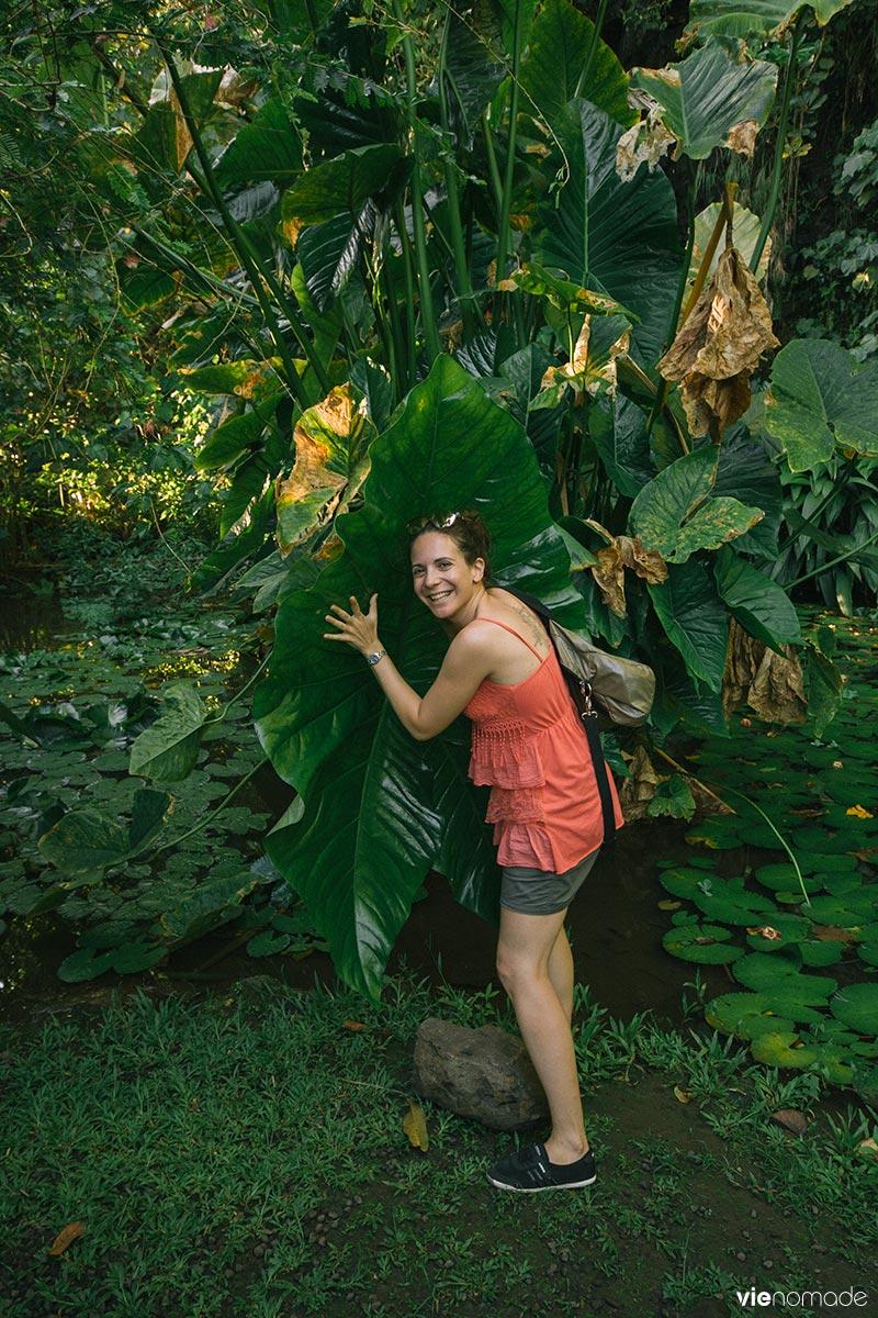 Feuilles géantes à Tahiti
