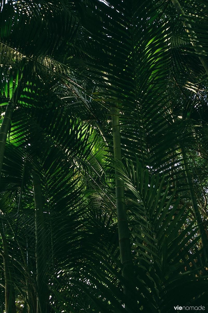 Végétation luxuriante à la Grotte de Maraa