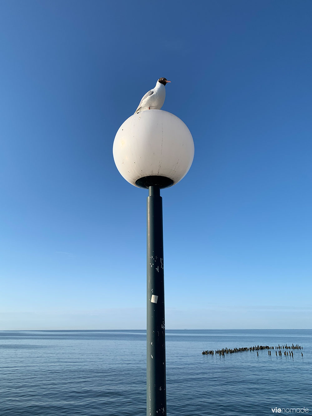 Mouette, Mer Baltique